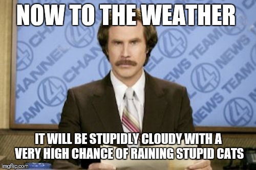 Ron Burgundy Meme | NOW TO THE WEATHER IT WILL BE STUPIDLY CLOUDY WITH A VERY HIGH CHANCE OF RAINING STUPID CATS | image tagged in memes,ron burgundy | made w/ Imgflip meme maker