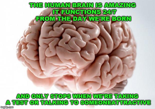 The Human Brain | image tagged in interesting,organ,funny meme | made w/ Imgflip meme maker