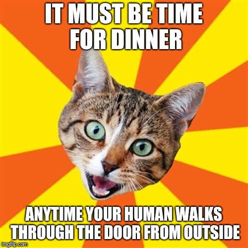 Pavlov's Cat |  IT MUST BE TIME FOR DINNER; ANYTIME YOUR HUMAN WALKS THROUGH THE DOOR FROM OUTSIDE | image tagged in memes,bad advice cat | made w/ Imgflip meme maker