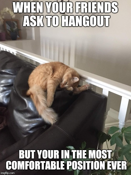 lazy cats | WHEN YOUR FRIENDS ASK TO HANGOUT BUT YOUR IN THE MOST COMFORTABLE POSITION EVER | image tagged in bruh,fluffy,im,gonna,die | made w/ Imgflip meme maker