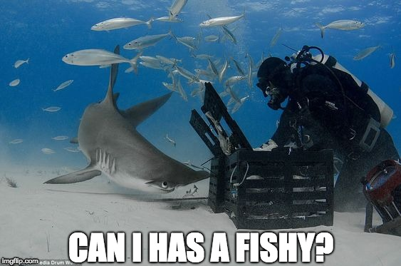 Joe Romeiro's Hammerhead | CAN I HAS A FISHY? | image tagged in shark,shark week,hammerheadshark,fish,nomnom,hungry | made w/ Imgflip meme maker