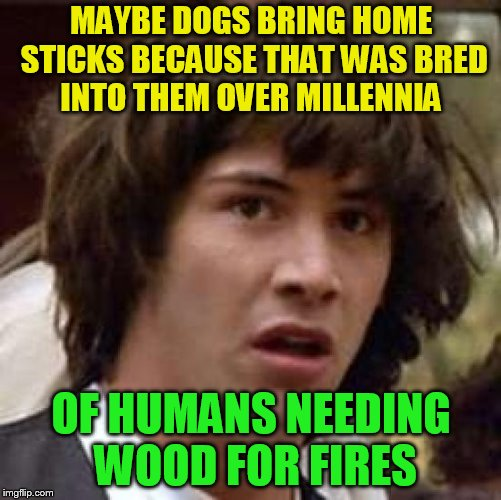 Conspiracy Keanu | MAYBE DOGS BRING HOME STICKS BECAUSE THAT WAS BRED INTO THEM OVER MILLENNIA OF HUMANS NEEDING WOOD FOR FIRES | image tagged in memes,conspiracy keanu,dogs,wood,fires,home | made w/ Imgflip meme maker