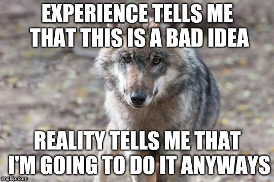 Depressing wolf | EXPERIENCE TELLS ME THAT THIS IS A BAD IDEA REALITY TELLS ME THAT I'M GOING TO DO IT ANYWAYS | image tagged in funny,wolf,demotivationals | made w/ Imgflip meme maker