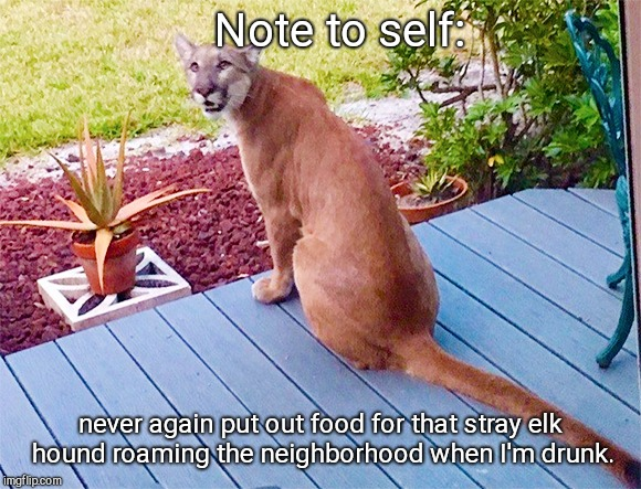 Note to self: never again put out food for that stray elk hound roaming the neighborhood when I'm drunk. | image tagged in elk hound,cougar,panther,humor | made w/ Imgflip meme maker