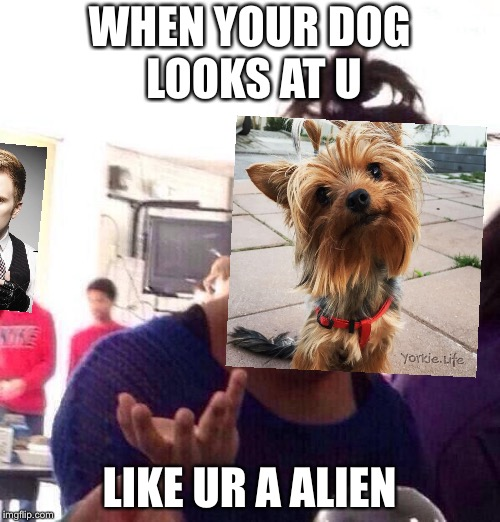 Black Girl Wat | WHEN YOUR DOG LOOKS AT U LIKE UR A ALIEN | image tagged in memes,black girl wat | made w/ Imgflip meme maker
