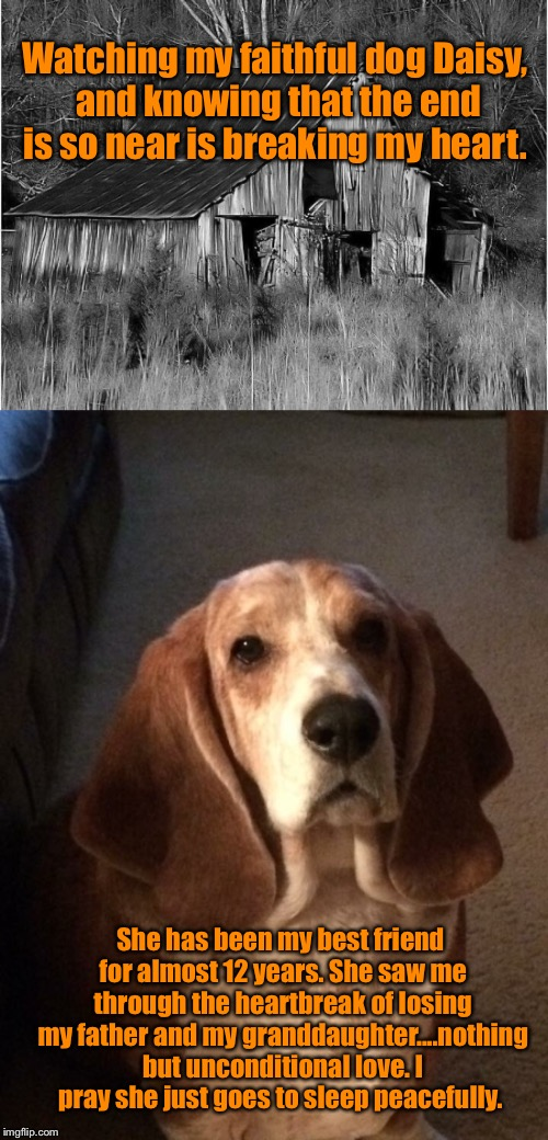Prayers for Daisy | Watching my faithful dog Daisy, and knowing that the end is so near is breaking my heart. She has been my best friend for almost 12 years. S | image tagged in best friend,basset hound,broken heart,unconditional love | made w/ Imgflip meme maker