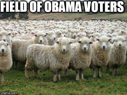 they all voted  obama again a second time | FIELD OF OBAMA VOTERS | image tagged in hillary supporters,obama,field,of,sheep | made w/ Imgflip meme maker