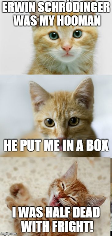 *Waves at Imgflip* | ERWIN SCHRÖDINGER WAS MY HOOMAN I WAS HALF DEAD WITH FRIGHT! HE PUT ME IN A BOX | image tagged in bad pun cat,schrodinger,schrodingers cat | made w/ Imgflip meme maker