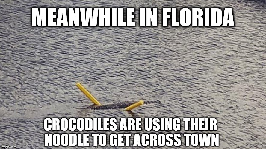 Meanwhile In Florida | MEANWHILE IN FLORIDA CROCODILES ARE USING THEIR NOODLE TO GET ACROSS TOWN | image tagged in florida,crocodile,alligator,gator,rain,swimming | made w/ Imgflip meme maker