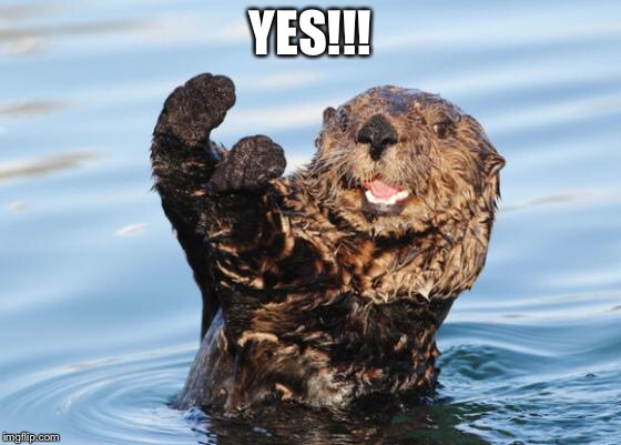 otter celebration | YES!!! | image tagged in otter celebration | made w/ Imgflip meme maker