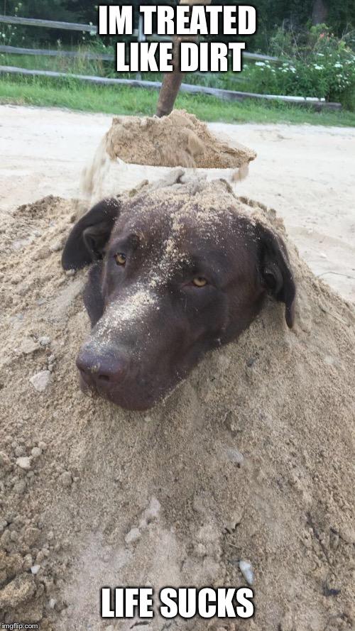 Sucks dog