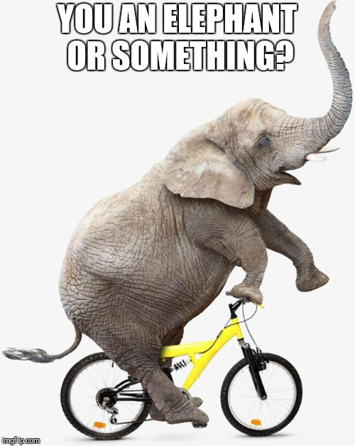 YOU AN ELEPHANT OR SOMETHING? | made w/ Imgflip meme maker
