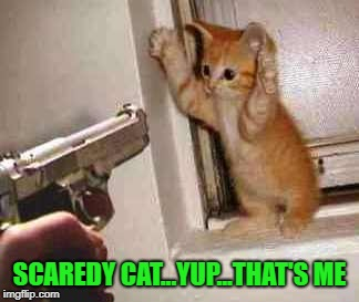 SCAREDY CAT...YUP...THAT'S ME | made w/ Imgflip meme maker