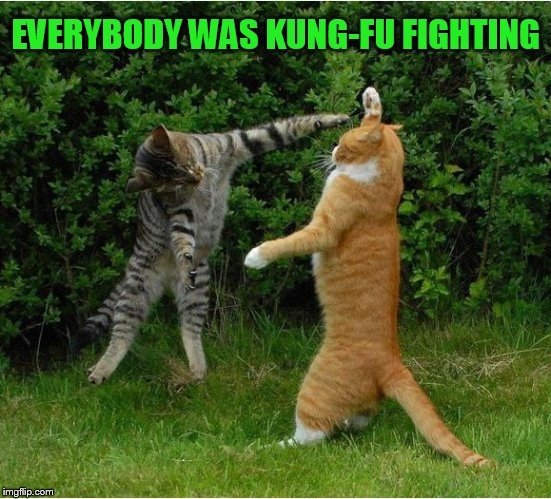 Cat Fight | EVERYBODY WAS KUNG-FU FIGHTING | image tagged in cat fight | made w/ Imgflip meme maker