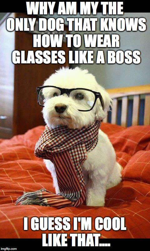 Intelligent Dog | WHY AM MY THE ONLY DOG THAT KNOWS HOW TO WEAR GLASSES LIKE A BOSS I GUESS I'M COOL LIKE THAT.... | image tagged in memes,intelligent dog | made w/ Imgflip meme maker