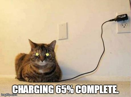 CHARGING 65% COMPLETE. | image tagged in funny,cats | made w/ Imgflip meme maker