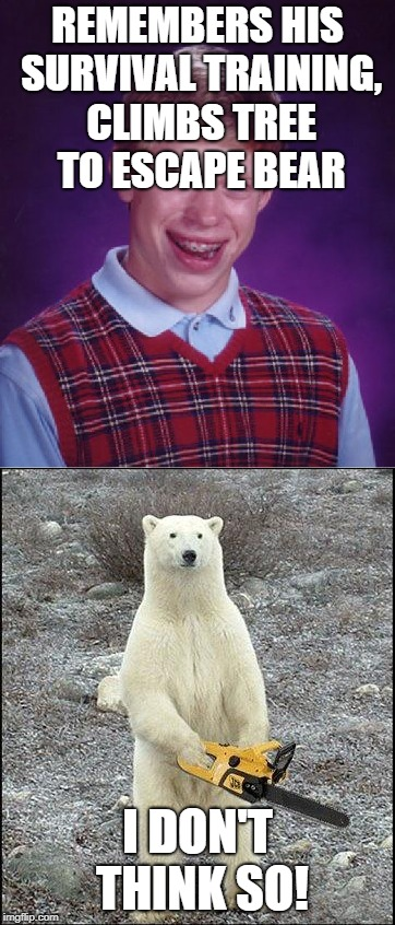 Bad Luck Bears | REMEMBERS HIS SURVIVAL TRAINING, CLIMBS TREE TO ESCAPE BEAR I DON'T THINK SO! | image tagged in bad luck brian,survival,chainsaw polar bear | made w/ Imgflip meme maker