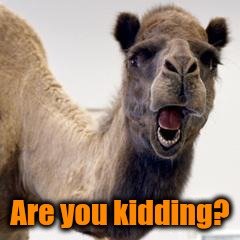 Camel | Are you kidding? | image tagged in camel | made w/ Imgflip meme maker