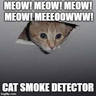 Ceiling Cat | MEOW! MEOW! MEOW! MEOW! MEEEOOWWW! CAT SMOKE DETECTOR | image tagged in memes,ceiling cat | made w/ Imgflip meme maker