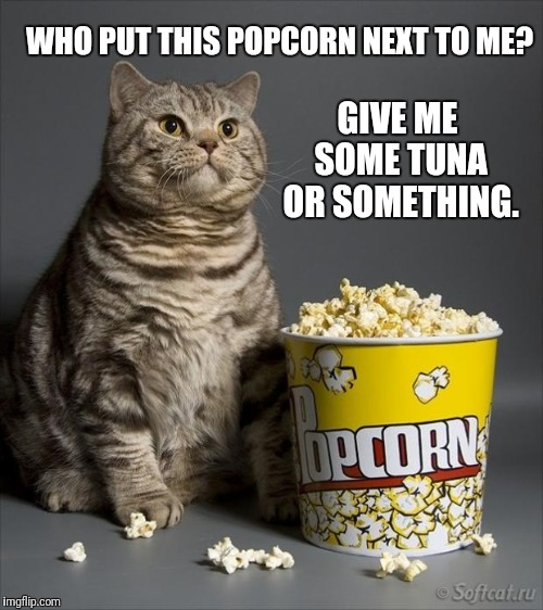 The Cat Knows | WHO PUT THIS POPCORN NEXT TO ME? GIVE ME SOME TUNA OR SOMETHING. | image tagged in cat eating popcorn,tuna,eat,food,something | made w/ Imgflip meme maker