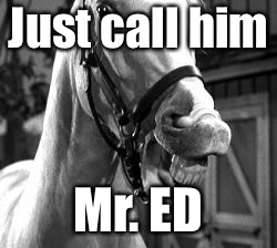 Mr Ed | Just call him Mr. ED | image tagged in mr ed | made w/ Imgflip meme maker