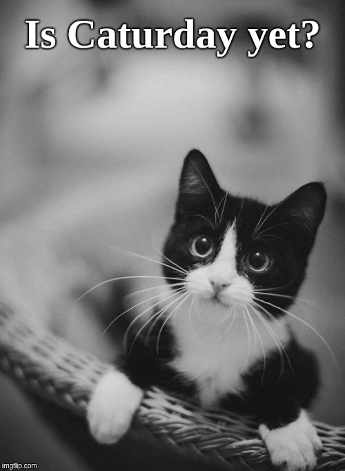 Cute Black White Kitten Memes Gifs Imgflip