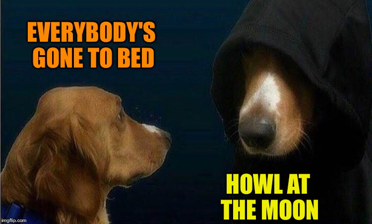 Maybe it'll get cloudy. | EVERYBODY'S GONE TO BED HOWL AT THE MOON | image tagged in dog,moon,barking,memes,funny | made w/ Imgflip meme maker