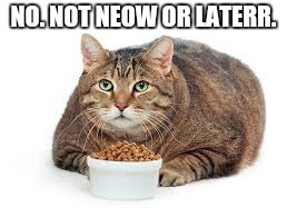 NO. NOT NEOW OR LATERR. | image tagged in fat cat | made w/ Imgflip meme maker