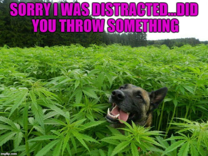 SORRY I WAS DISTRACTED...DID YOU THROW SOMETHING | made w/ Imgflip meme maker