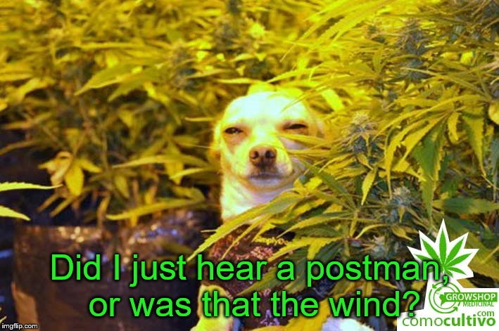 dog weed | Did I just hear a postman, or was that the wind? | image tagged in dog weed | made w/ Imgflip meme maker