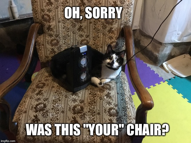"Territorial cat in your chair meme | OH, SORRY WAS THIS ""YOUR"" CHAIR? 