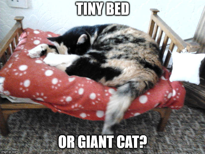 Scale is everything | TINY BED OR GIANT CAT? | image tagged in memes,cat,scale | made w/ Imgflip meme maker