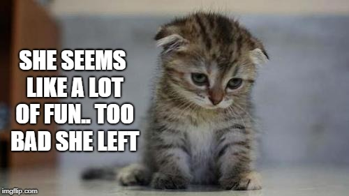 Sad kitten | SHE SEEMS LIKE A LOT OF FUN.. TOO BAD SHE LEFT | image tagged in sad kitten | made w/ Imgflip meme maker