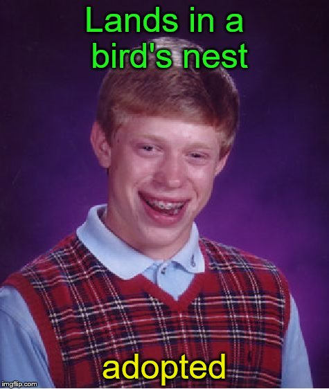 Bad Luck Brian Meme | Lands in a bird's nest adopted | image tagged in memes,bad luck brian | made w/ Imgflip meme maker