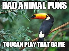 BAD ANIMAL PUNS TOUCAN PLAY THAT GAME | image tagged in funny,memes,animals,bad pun,bad joke | made w/ Imgflip meme maker