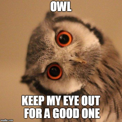 inquisitve owl | OWL KEEP MY EYE OUT FOR A GOOD ONE | image tagged in inquisitve owl | made w/ Imgflip meme maker