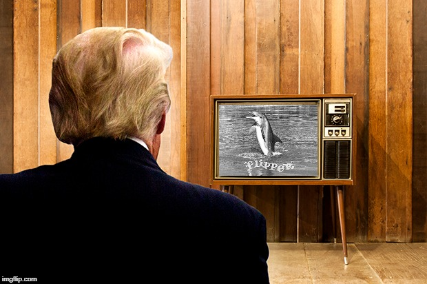 Trump Watches Flipper | image tagged in trump,crime,tv,michael cohen,manafort,impeach | made w/ Imgflip meme maker