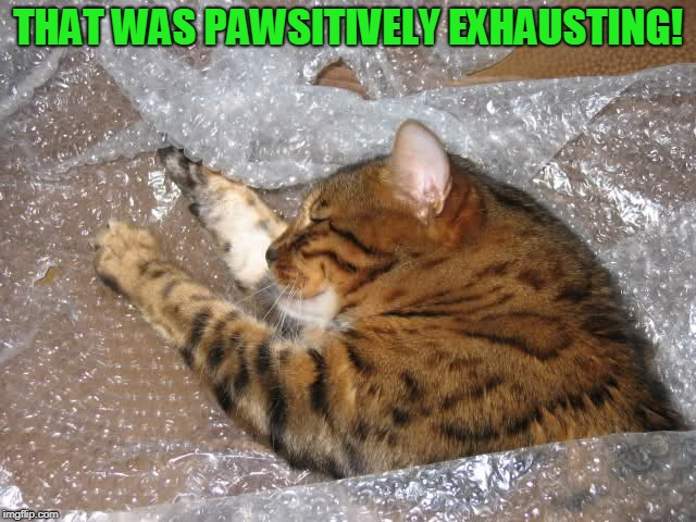 THAT WAS PAWSITIVELY EXHAUSTING! | image tagged in cat | made w/ Imgflip meme maker