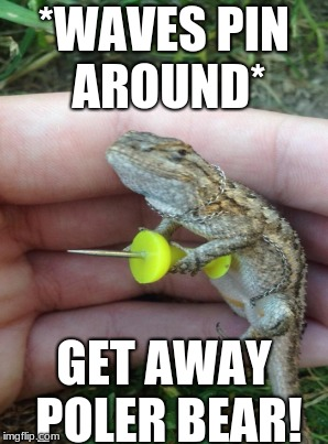 NO TOUCH! |  *WAVES PIN AROUND*; GET AWAY POLER BEAR! | image tagged in danger,nope rope,bearded dragon | made w/ Imgflip meme maker