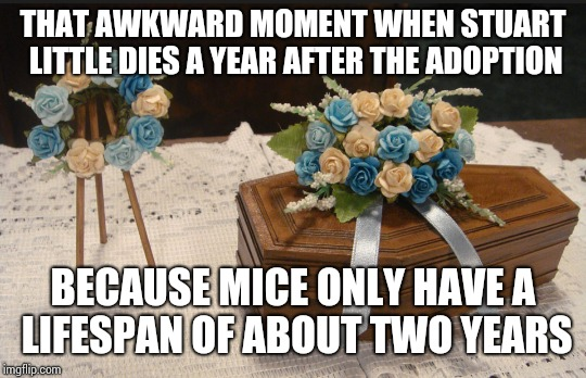 That awkward moment meme | THAT AWKWARD MOMENT WHEN STUART LITTLE DIES A YEAR AFTER THE ADOPTION BECAUSE MICE ONLY HAVE A LIFESPAN OF ABOUT TWO YEARS | image tagged in stuart little,that awkward moment | made w/ Imgflip meme maker
