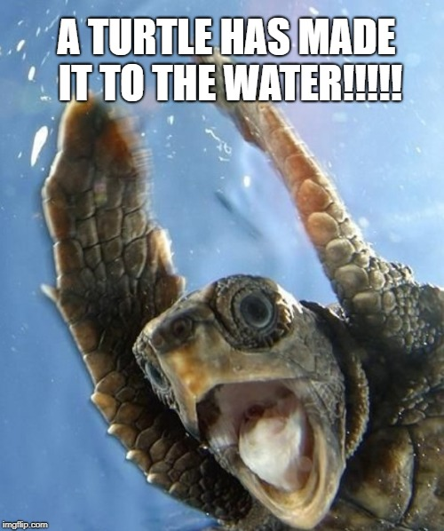 A TUTLE HAS MADE IT TO THE WATER | A TURTLE HAS MADE IT TO THE WATER!!!!! | image tagged in yelling turtle,wow,bfa,turtle | made w/ Imgflip meme maker