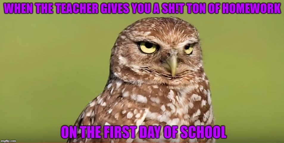 So Relatable  | WHEN THE TEACHER GIVES YOU A SH!T TON OF HOMEWORK ON THE FIRST DAY OF SCHOOL | image tagged in death stare owl,memes,funny,doctordoomsday180,homework,first day of school | made w/ Imgflip meme maker