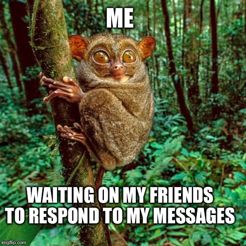 Lonely lemur  | ME WAITING ON MY FRIENDS TO RESPOND TO MY MESSAGES | image tagged in friends,friendship,lonely,sadness,lost,hello there | made w/ Imgflip meme maker
