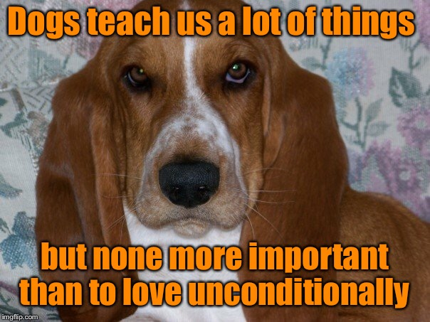 a dogs unconditional love  | Dogs teach us a lot of things but none more important than to love unconditionally | image tagged in unconditional love,basset hound,love,man's best friend | made w/ Imgflip meme maker