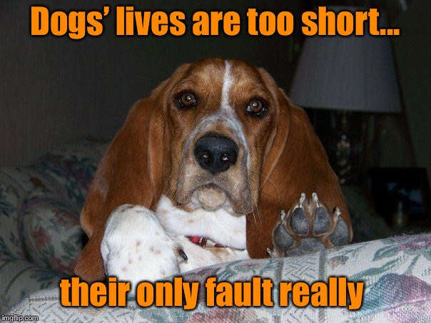 No fault of their own  | Dogs' lives are too short... their only fault really | image tagged in basset hound,dogs life,grief,man's best friend | made w/ Imgflip meme maker