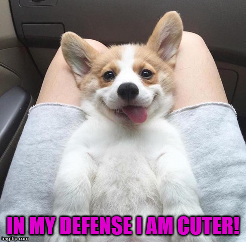 IN MY DEFENSE I AM CUTER! | made w/ Imgflip meme maker