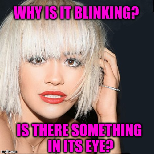 ditz | WHY IS IT BLINKING? IS THERE SOMETHING IN ITS EYE? | image tagged in ditz | made w/ Imgflip meme maker