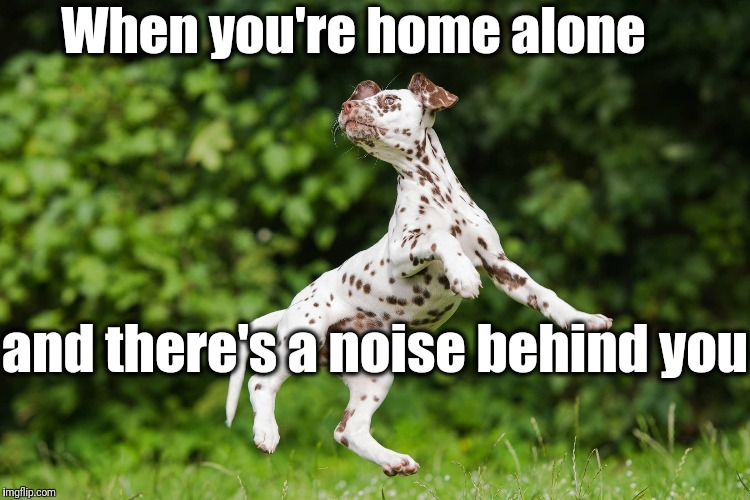 Mommy!! |  When you're home alone; and there's a noise behind you | image tagged in scared,jump,yikes | made w/ Imgflip meme maker