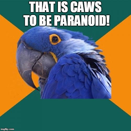 Paranoid Parrot Meme | THAT IS CAWS TO BE PARANOID! | image tagged in memes,paranoid parrot | made w/ Imgflip meme maker