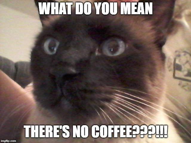 WHAT DO YOU MEAN THERE'S NO COFFEE???!!! | image tagged in cat,coffee | made w/ Imgflip meme maker